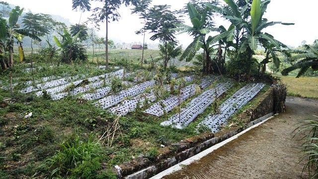 Tanah Siap Bangun Villa/Rumah Kemuning Istimewa View Solo/Sragen 730m