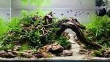 Aquarium Aqua Scape
